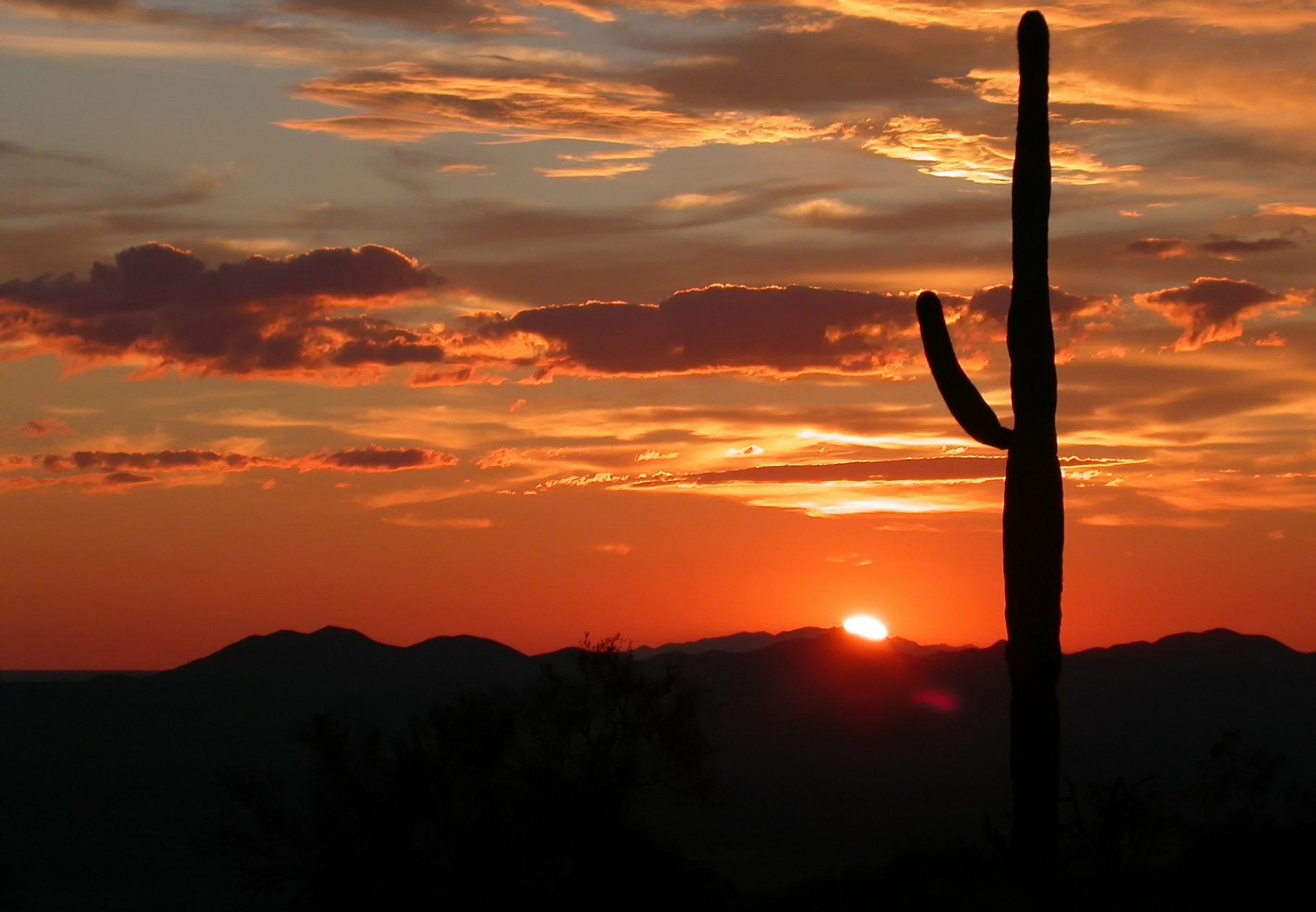 SONORAN DESERT JOURNALISTS
